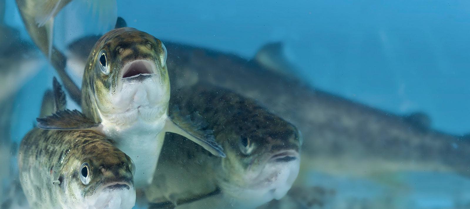 unikfiltersystem-akvakultur2